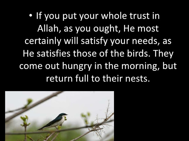 He satisfies those of the birds - Allah Quotes