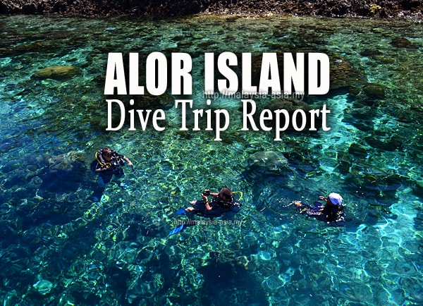 Alor Island Diving Review Report