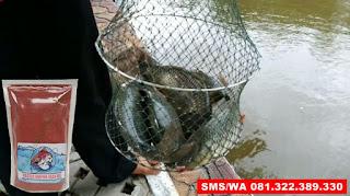 Umpan Ikan Mas Subang Khusus Untuk Musim Hujan
