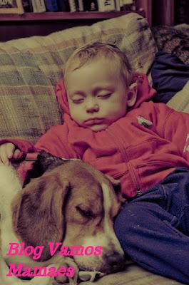 Bebês e cachorros - Como funciona a relação