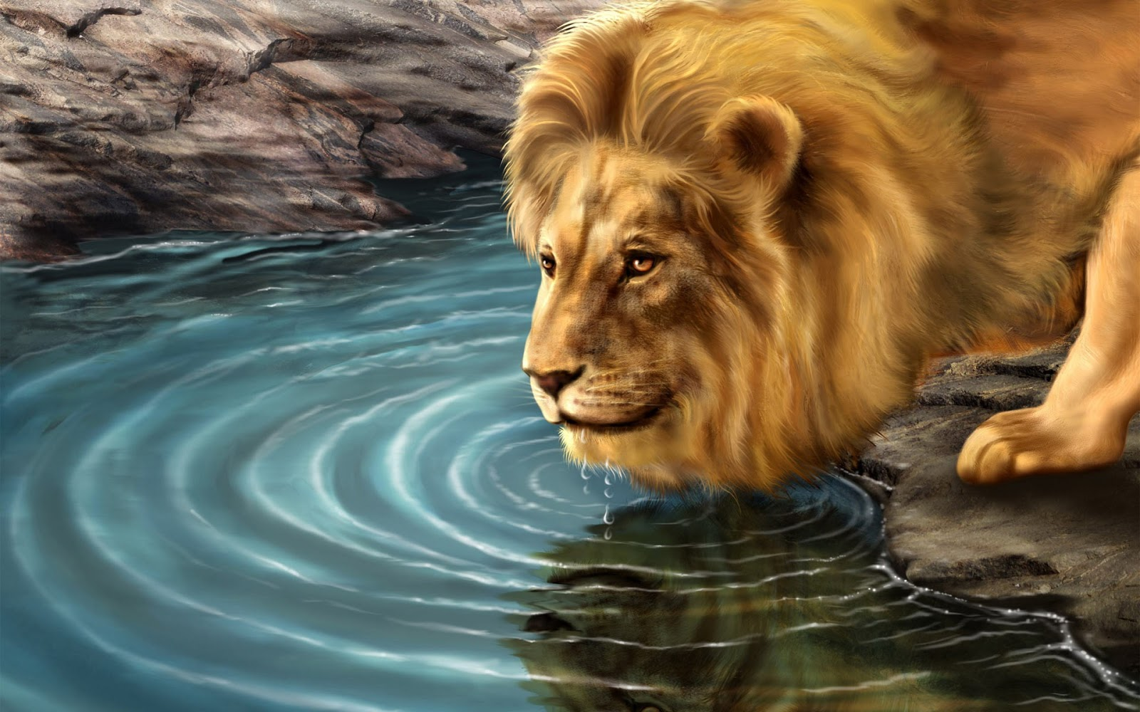 Lion HD Wallpapers Free Pictures Download Photos