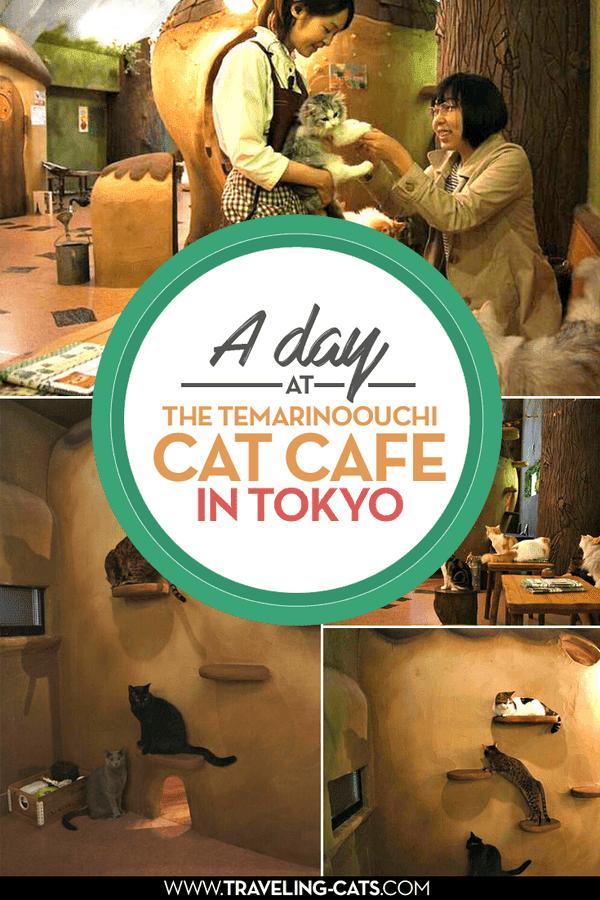 cat café tokyo
