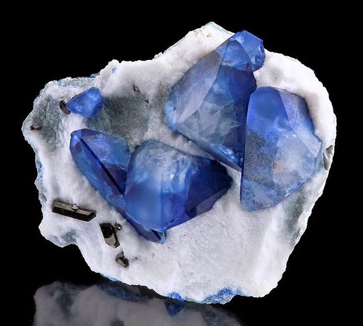 Stunning specimen featuring Benitoite crystals on Natrolite alongside dark Neptunites  Benitoite crystals on Natrolite