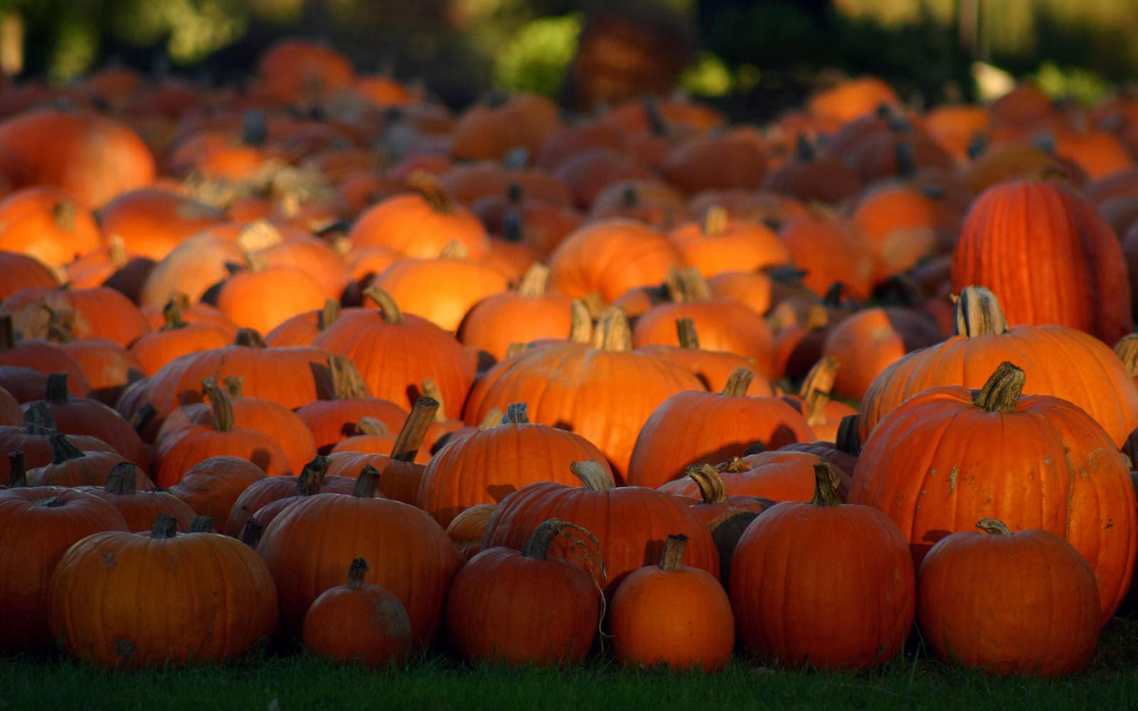 halloween pictures wallpaper pumpkin - photo #15
