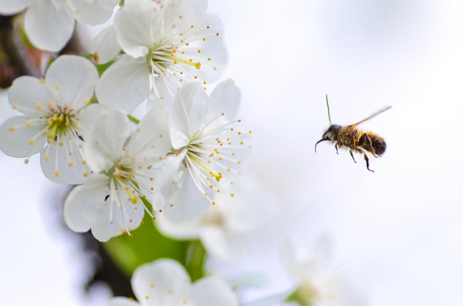 Hunaja, siitepöly, propolis ja perga. Mitä niiden terveysvaikutuksista voi kertoa?
