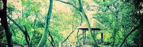 Wisata Hutan Bakau Margomulyo Di Balikpapan Tempat Wisata Terbaik Yang Ada Di Indonesia: Wisata Hutan Bakau Margomulyo Di Balikpapan