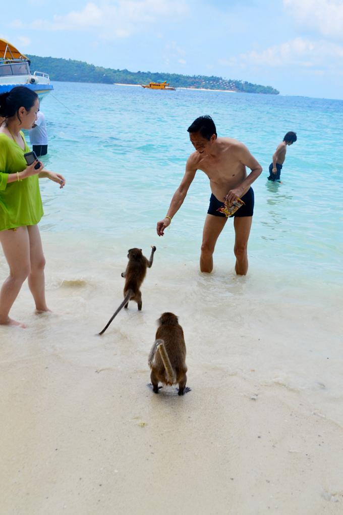 Monkey Beach - The Wayfarer