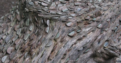 An Exmoor mystery: the wishing trees of Tarr Steps