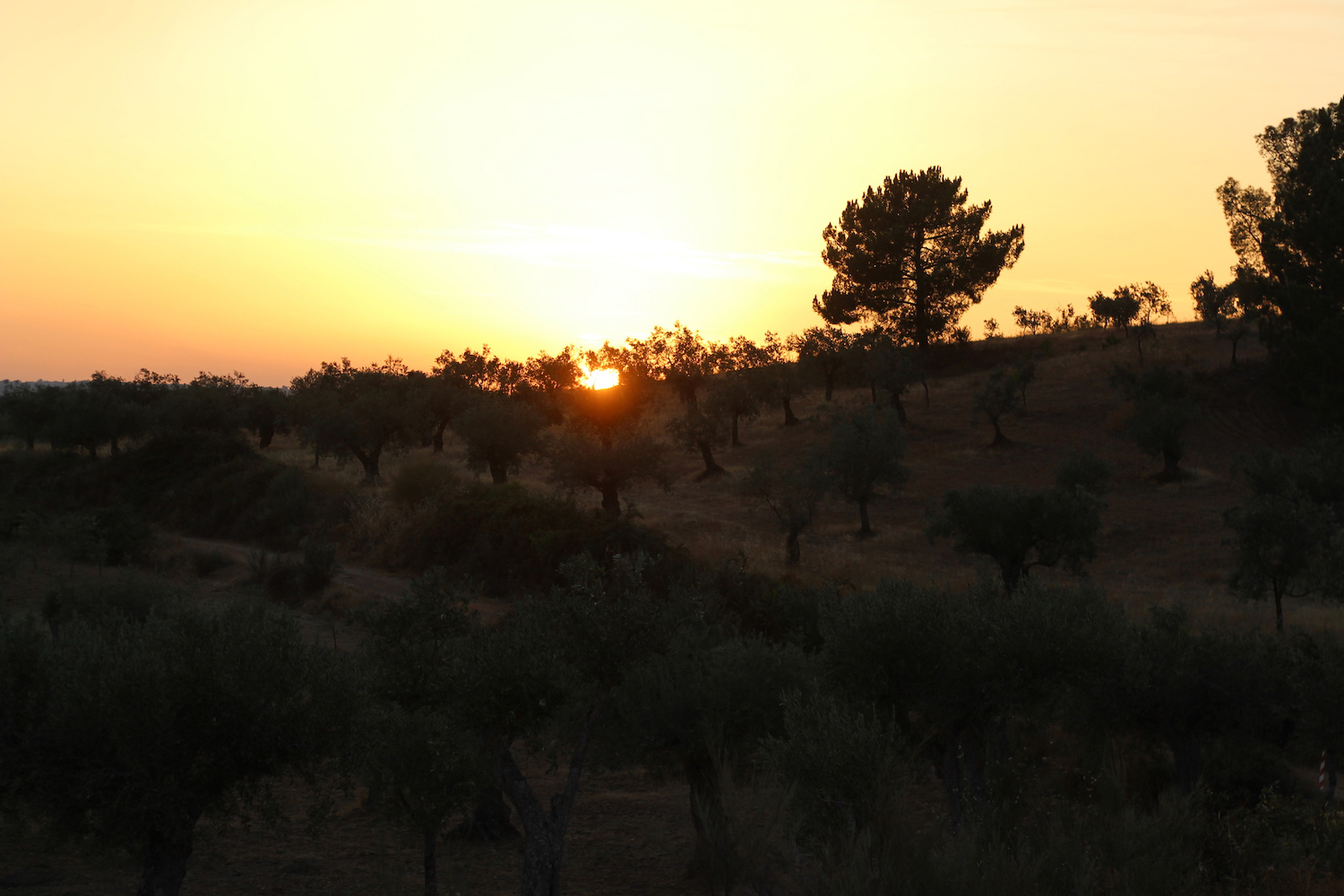sunset portugal countryside