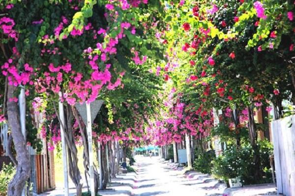 Một con đường rực đầy hoa giấy, con đường mà ai cũng muốn đến thăm một lần trong đời