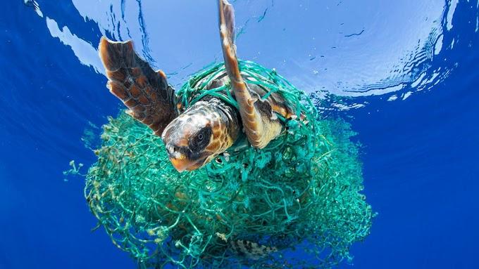 Jelentősen megnőtt a nyílt óceánban lévő műanyaghulladék mennyisége az elmúlt évtizedekben