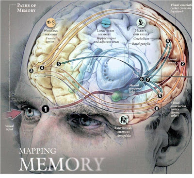 meningkatkan memori otak