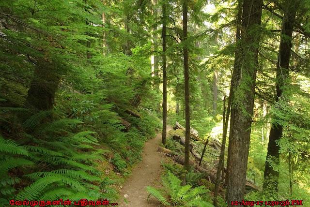 Oregon Watson Falls Hike