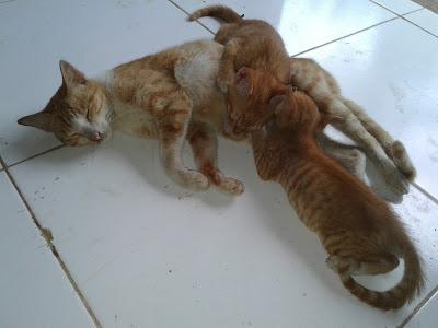 gambar Hewan Kucing lucu