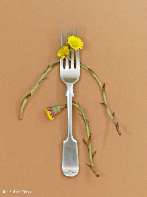 jadalne kwiaty podbiału