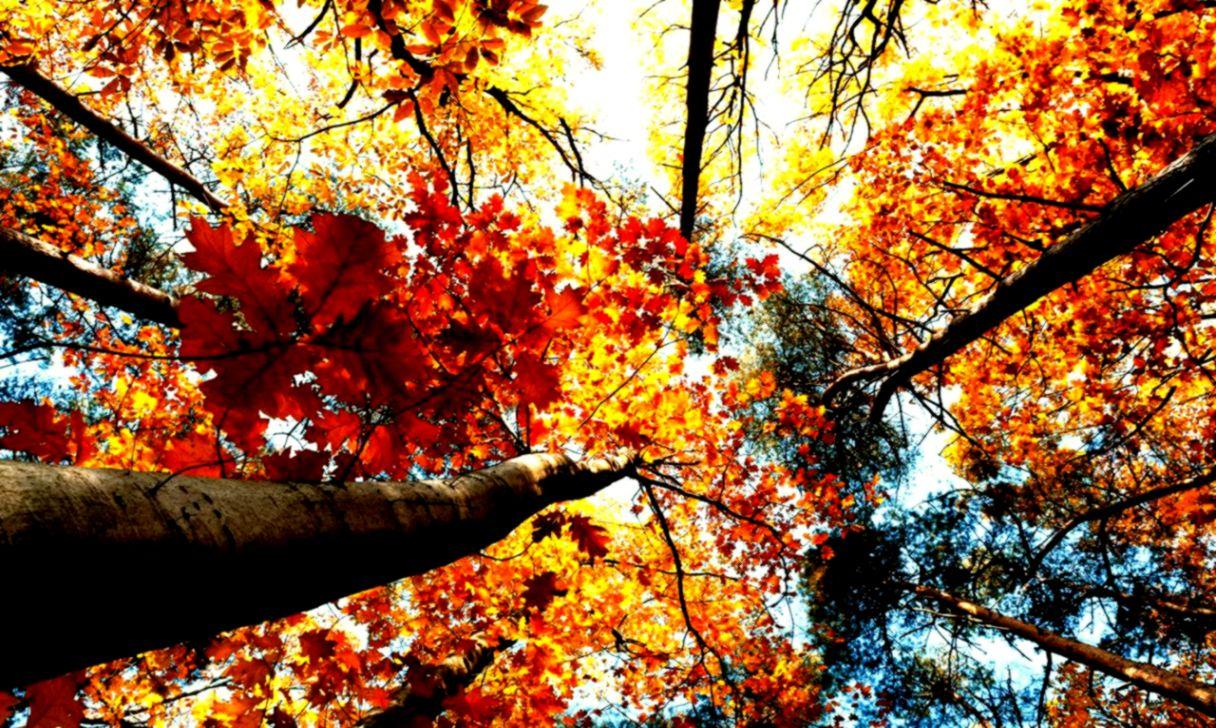 Unduh 4000 Background Tumblr Autumn HD Gratis