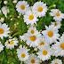 30 Best Flowers Wallpapers - HD