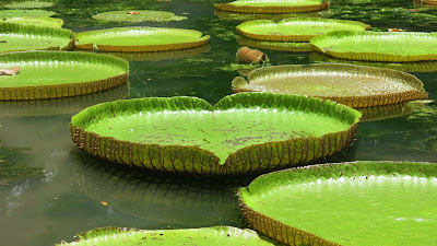 heart-shape-green-flovers-leaft-imgs