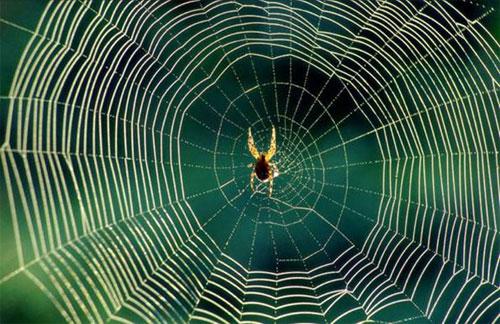 Örümcek İlaçlama Firması Okmeydanı