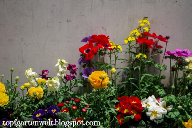 Gartenmesse Salzburg - Frühjahrsblüher - Gartenblog Topfgartenwelt