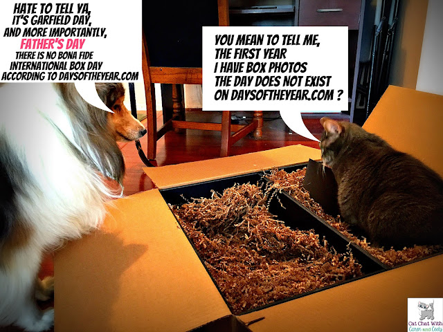 Cat chat with caren and cody fathers day garfield the cat day happy fathers day sciox Gallery