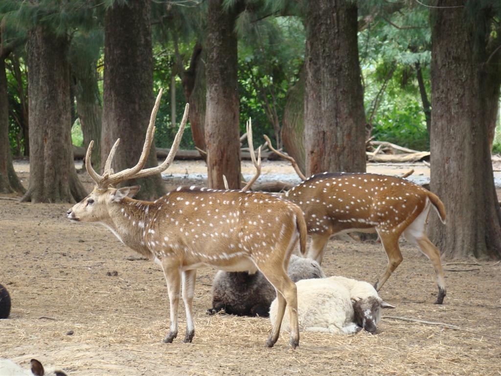 Patagônia 3/11: Zoológico de Luján - Colecionando Ímãs