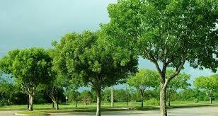 Tumbuhan Hijau (Pelajaran IPA SD/ MI Kelas V)