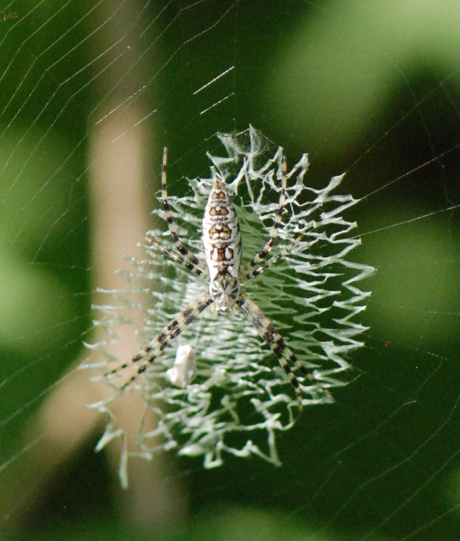 Spider Web Halloween Decorations: Gaia Garden: Spiders In Paradise