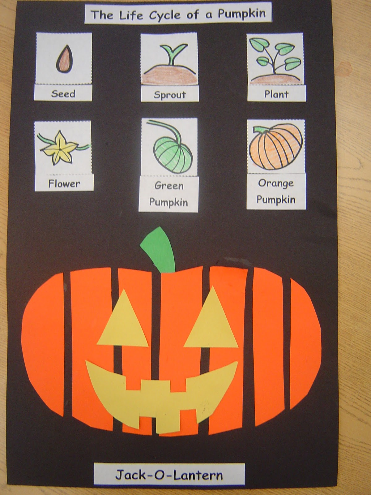 Mrs T S First Grade Class Life Cycle Of A Pumpkin