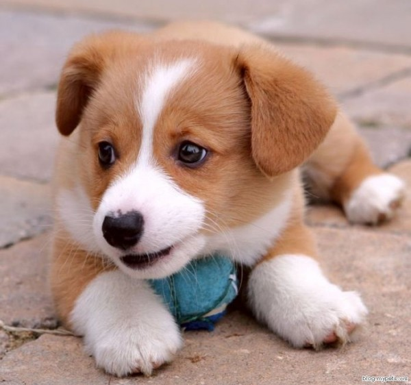 Cats And Dogs Blog Cute Puppy Picture