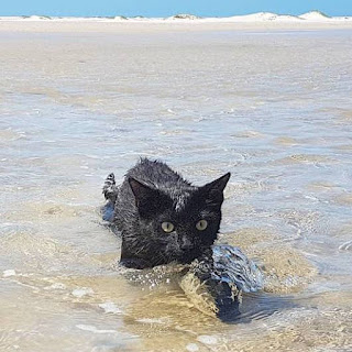 Australian open water swimmer and Instagram sensation, Nathan the Beach Cat