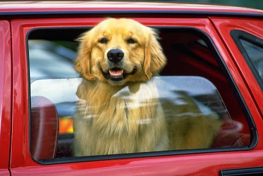 Pets Riding In Cars