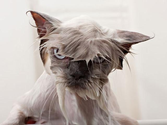 Divertidas imágenes de gatos molestos