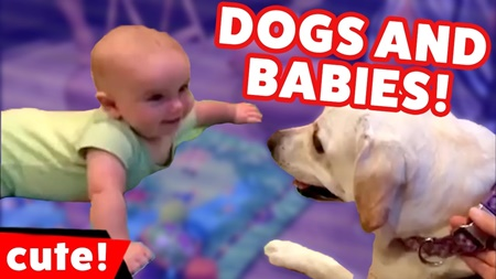 Cutest Dogs Playing With Babies 2017