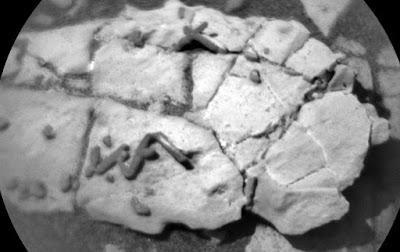 Mungkinkah Struktur Mars yang Aneh Ini Jejak Fosil?