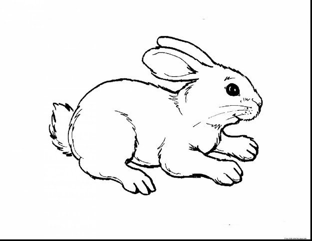 Good Kids Animal Coloring Pages To Print With Baby Animals Coloring Pages  And Baby Animals Coloring