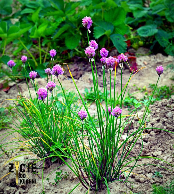 kwiaty szczypiorku, burak lisciowy, szparagi, salatka, kasza jaglana, kwiaty jadalne, wiosenna salatka, kwiaty szczypiorku, wiosna na talerzu, zycie od kuchni, czerwiec w kuchni, sezonowo czerwiec