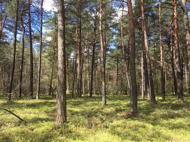 Polski wiosenny las - poszukując raju - zwiedzamy Polskę