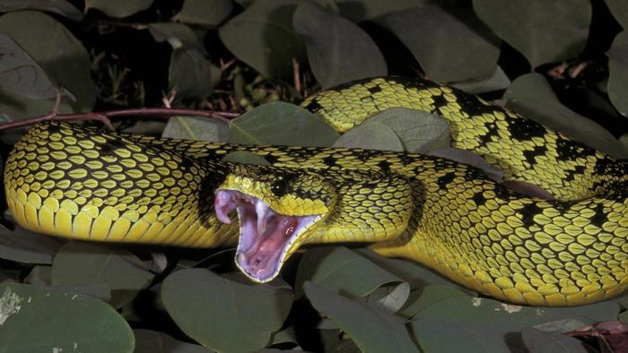 save nature love nature poisonous snakes of the india