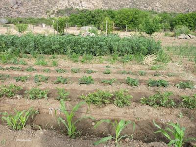 garden, Cafayate