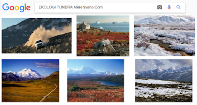 Ekologi Tundra, Kekhawatiran Ekologi Yang Mempengaruhi Tundra, Perubahan Iklim, Polusi Udara, Perkembangan Manusia dan Ketidakseimbangan Ekologi,makalah ekologi tundra