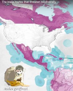 As rotas comerciais que ameaçam a biodiversidade