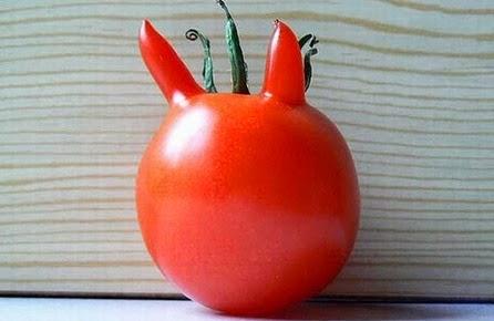 Vegetales con Formas Extrañas 6