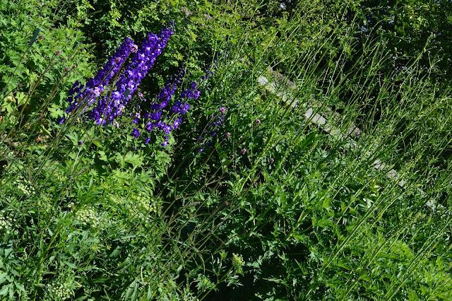 Hagen på Sofiero. Foto 4