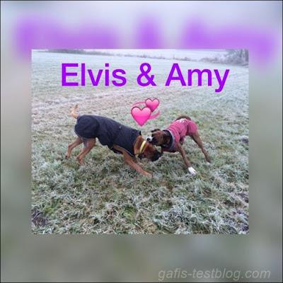 Elvis und Amy