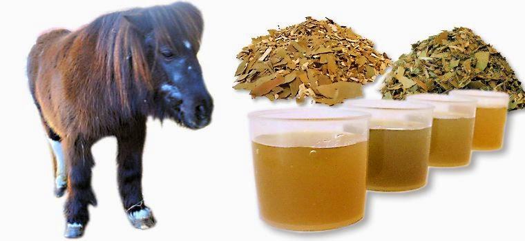 http://www.tierheilkundezentrum.de/shop/Pferde-Ponys-Esel-fuettern/Kraeuter-bei-Hufrehe:::425_310.html