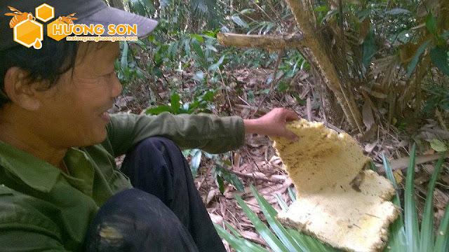 Mật ong rừng Hương Sơn có chất lượng không?