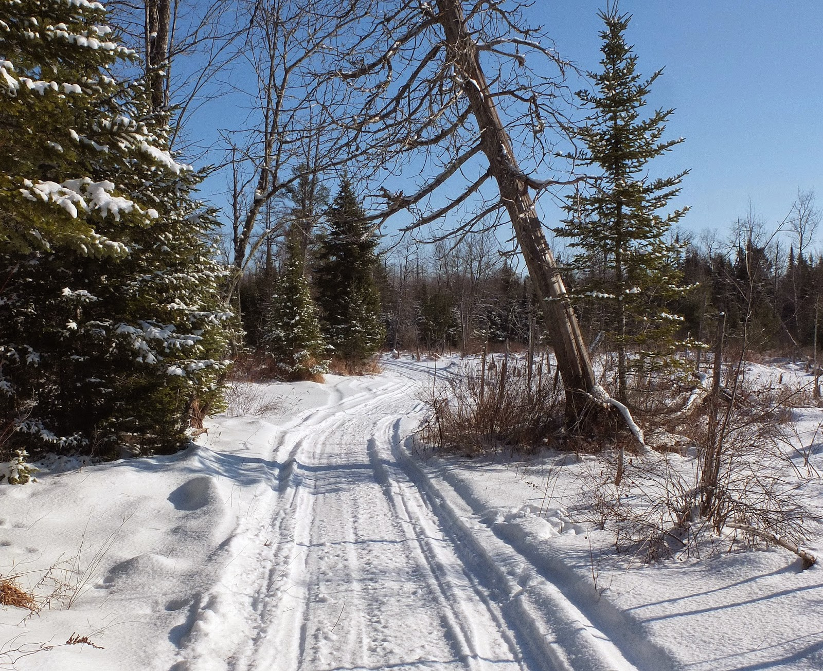 Hiking in Maine with Kelley: 1/16/15 Glenburn Snowmobile Trail