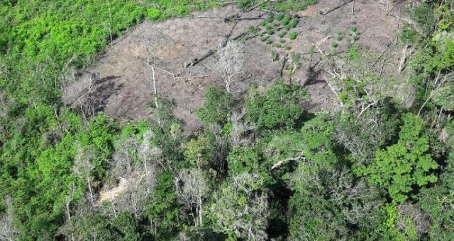CTA destrói mais de 160 mil pés de maconha em Centro do Guilherme