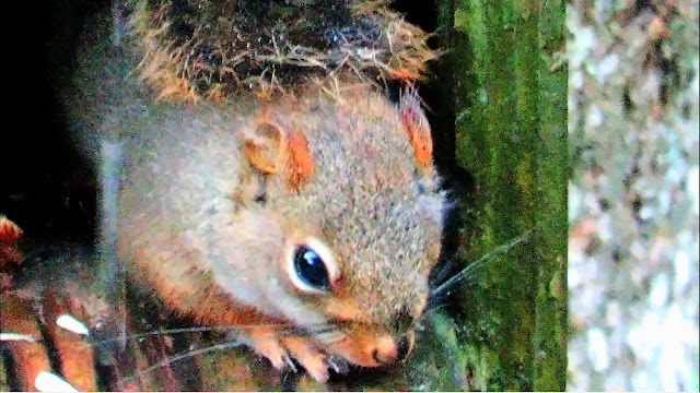 Young Squirrel Crying In The Rain